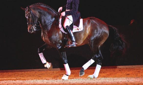 Fin Jopson training a horse in Piaffe