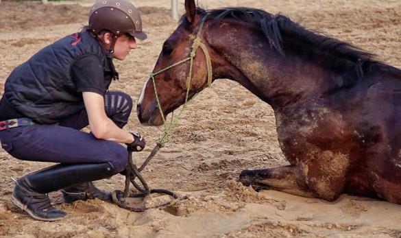 Fin Jopson uses horsemanship techniques