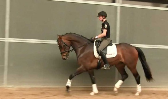 Fin Jopson training young horses